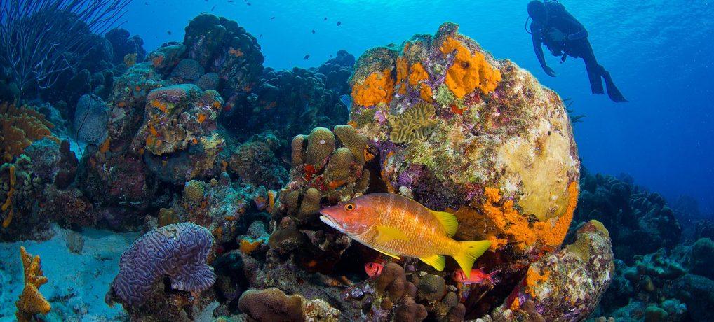 De betoverende onderwater wereld!